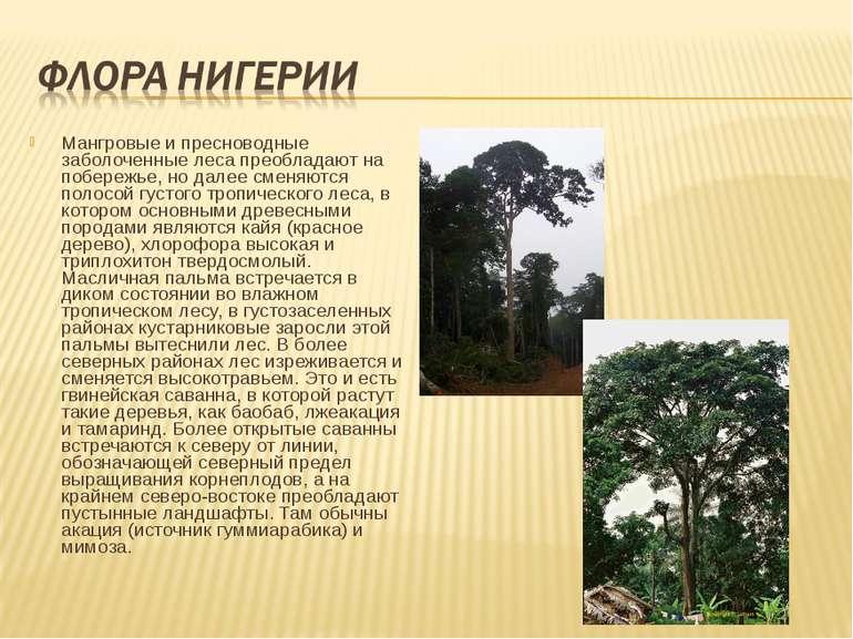 Мангровые и пресноводные заболоченные леса преобладают на побережье, но далее...