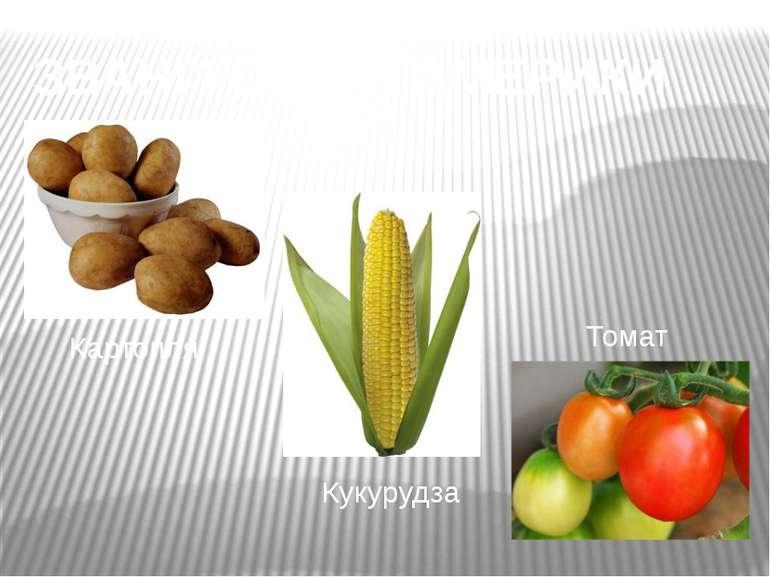 ЗВАНІ ГОСТІ З АМЕРИКИ Картопля Кукурудза Томат