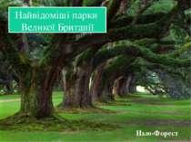 Найвідоміші парки Великої Британії Нью-Форест