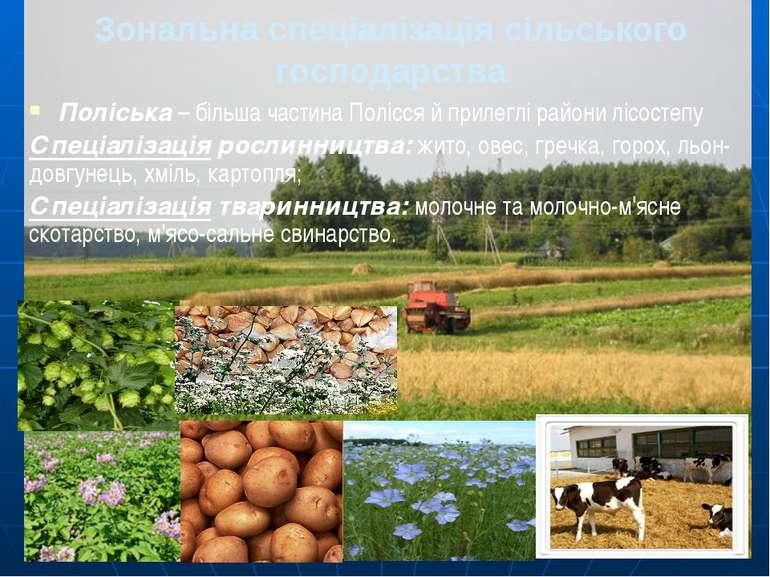 Зональна спеціалізація сільського господарства Поліська – більша частина Полі...