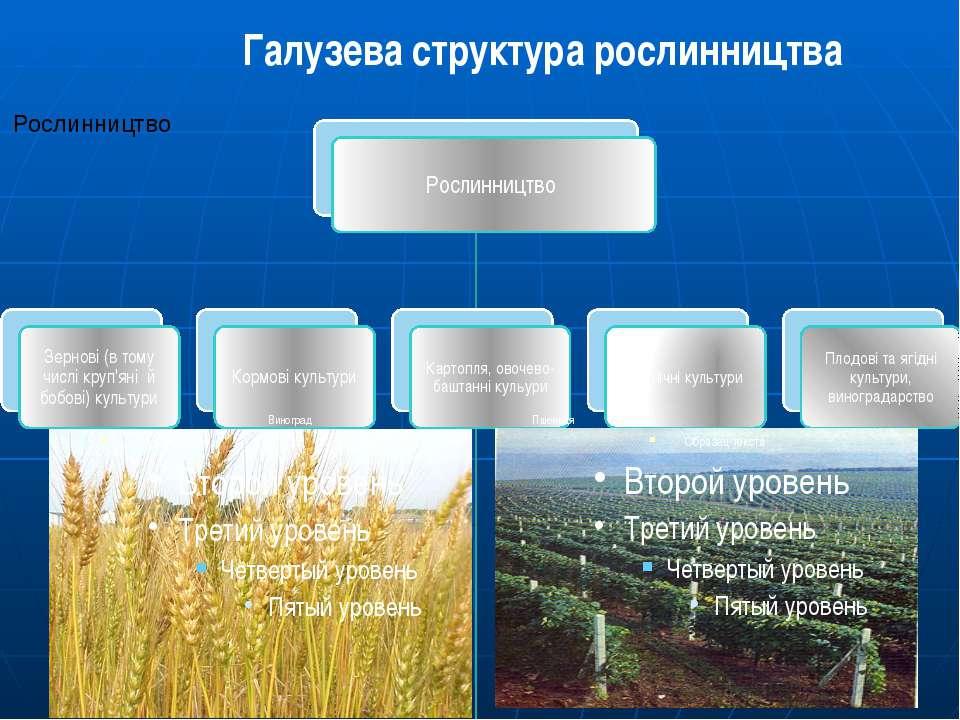 Галузева структура рослинництва Виноград Пшениця