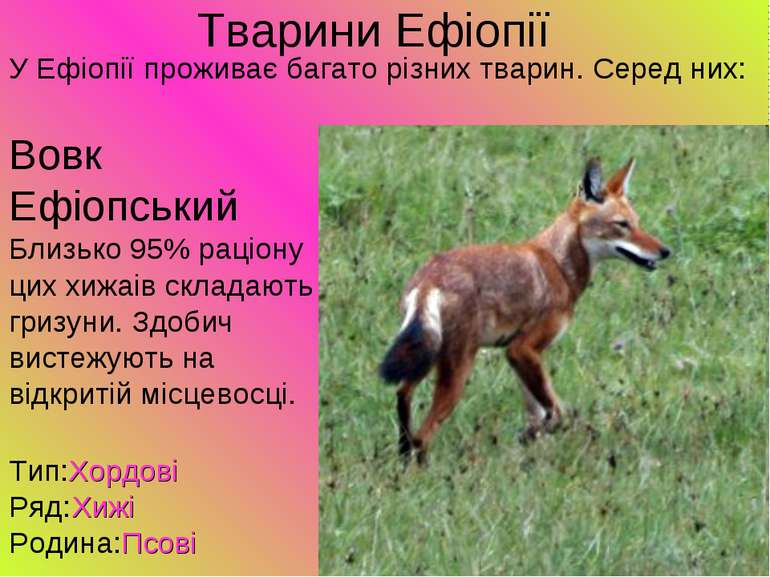 Тварини Ефіопії У Ефіопії проживає багато різних тварин. Серед них: Вовк Ефіо...