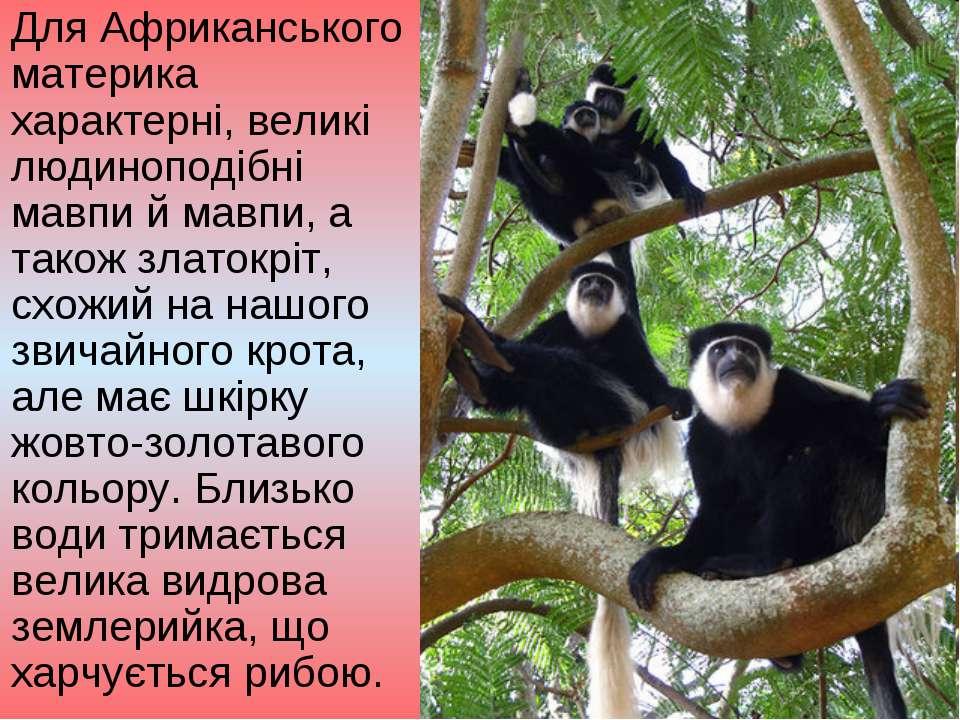 Для Африканського материка характерні, великі людиноподібні мавпи й мавпи, а ...