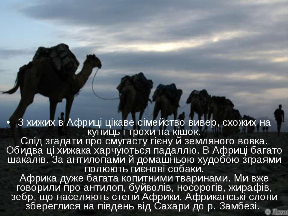 З хижих в Африці цікаве сімейство вивер, схожих на куниць і трохи на кішок. С...