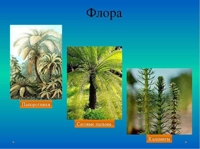 Флора Папоротники Саговые пальмы Каламиты
