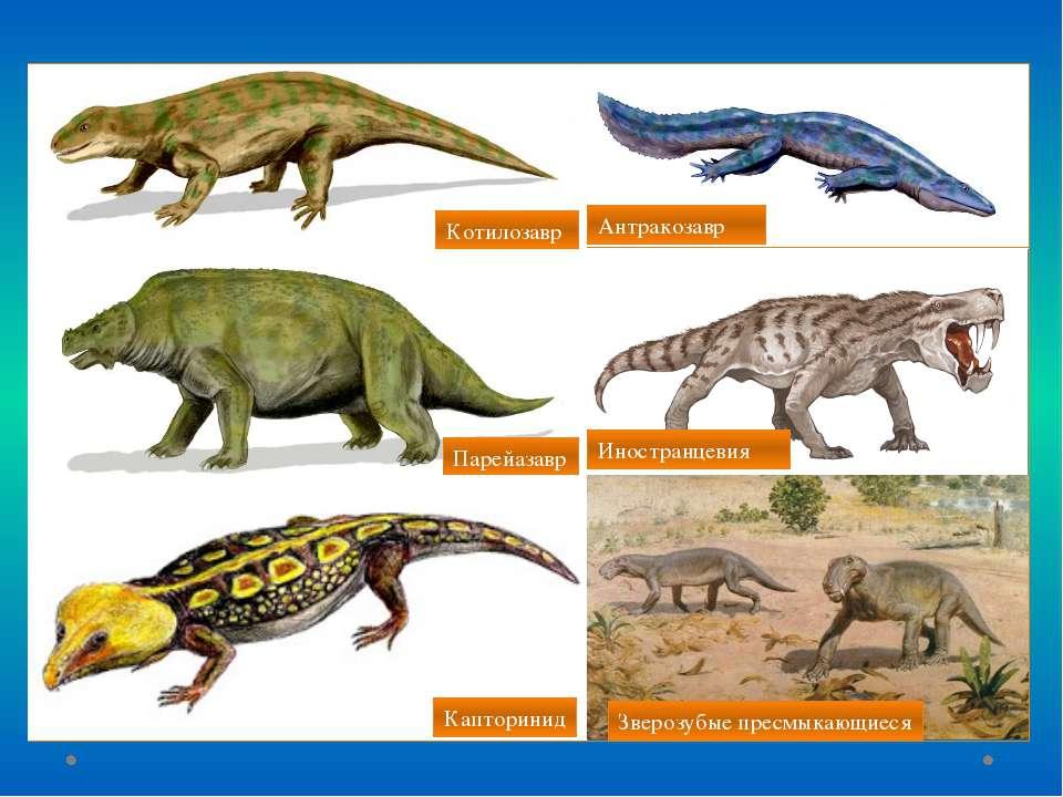 Котилозавр Парейазавр Капторинид Антракозавр Иностранцевия Зверозубые пресмык...