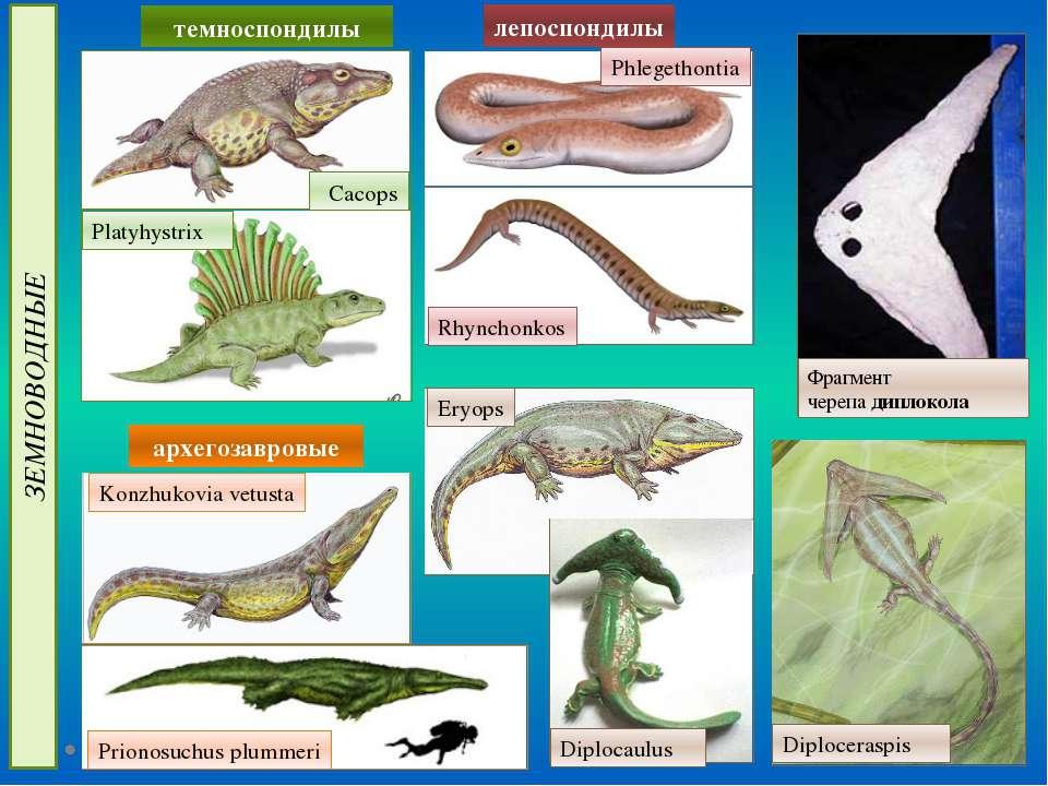 ЗЕМНОВОДНЫЕ архегозавровые лепоспондилы Platyhystrix