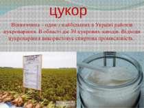 цукор Вінниччина – один з найбільших в Україні районів цукроваріння. В област...
