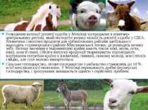 Розведення великої рогатої худоби у Мексиці зосереджене в північно-центрально...