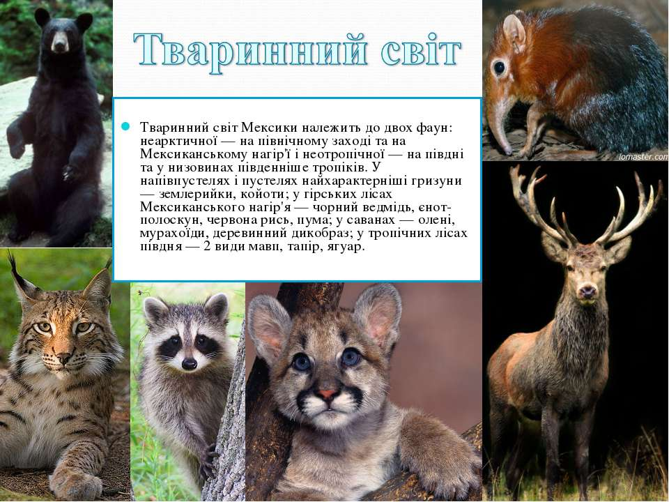 Тваринний світ Мексики належить до двох фаун: неарктичної — на північному зах...
