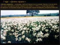 7 чудо : « Долина нарцисів » «Долина нарциciв» - заповідник, який розташовуєт...