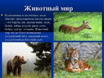 Животный мир В смешанных и лиственных лесах обитают представители многих видо...