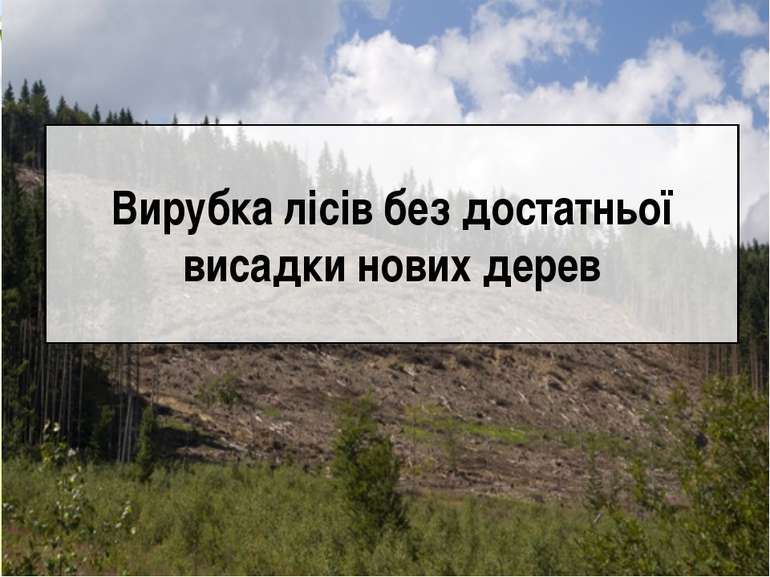 Вирубка лісів без достатньої висадки нових дерев