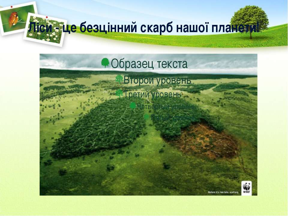 Ліси - це безцінний скарб нашої планети!