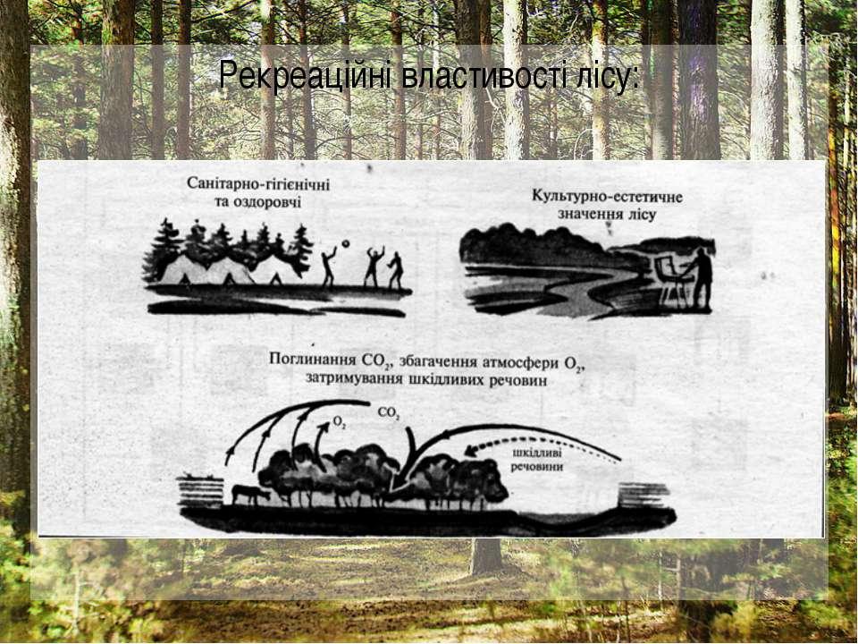 Рекреаційні властивості лісу: