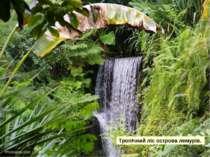 Тропічний ліс острова лемурів.
