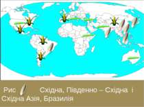 Рис Східна, Південно – Східна і Східна Азія, Бразилія