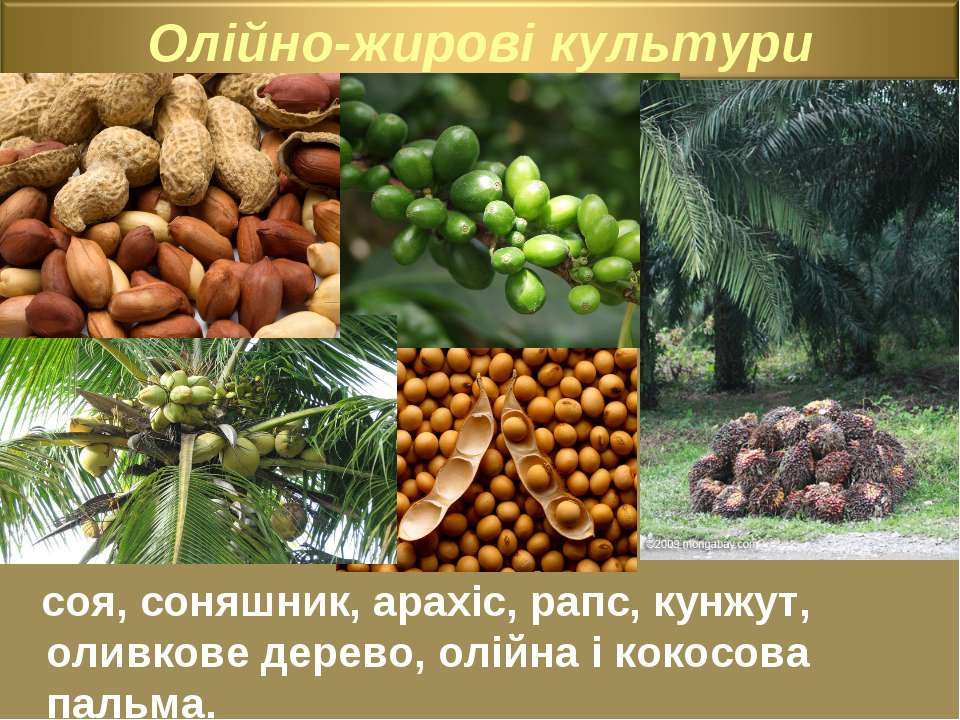 соя, соняшник, арахіс, рапс, кунжут, оливкове дерево, олійна і кокосова пальма.