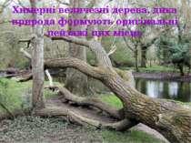 Химерні величезні дерева, дика природа формують оригінальні пейзажі цих місць