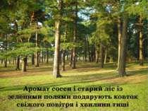 Аромат сосен і старий ліс із зеленими полями подарують ковток свіжого повітря...