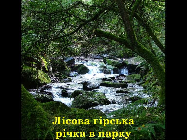 Лісова гірська річка в парку Ексмур