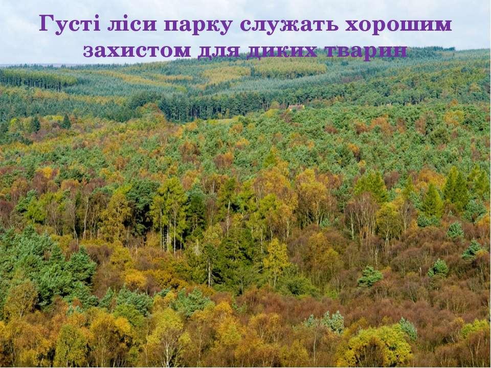 Густі ліси парку служать хорошим захистом для диких тварин