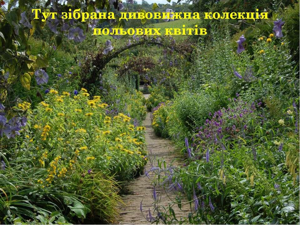 Тут зібрана дивовижна колекція польових квітів