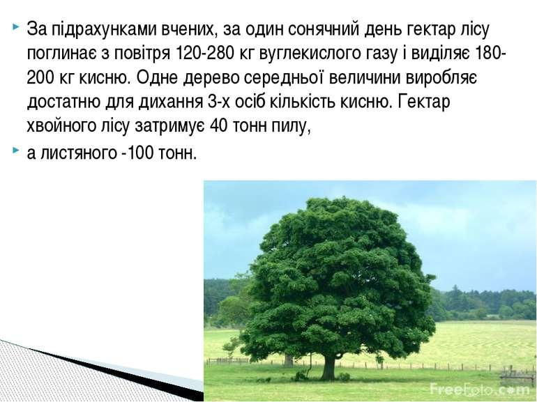 За підрахунками вчених, за один сонячний день гектар лісу поглинає з повітря ...
