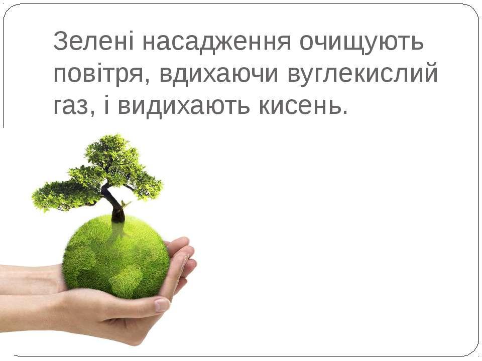 Зелені насадження очищують повітря, вдихаючи вуглекислий газ, і видихають кис...