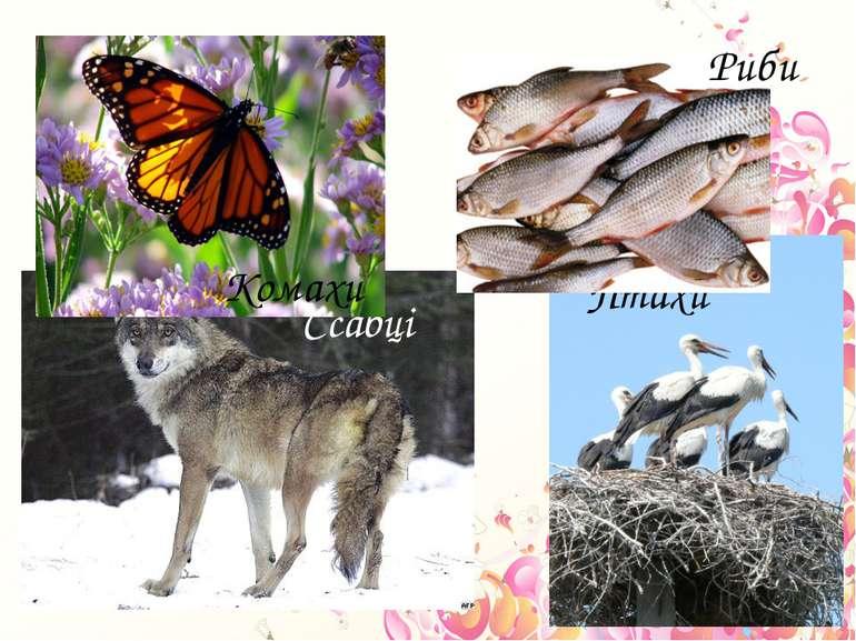 Ссавці Птахи Комахи Риби