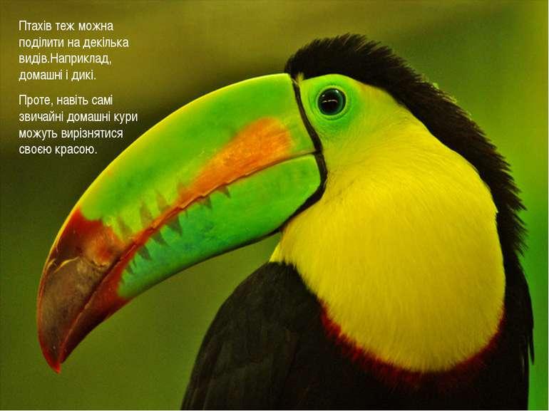 Птахів теж можна поділити на декілька видів.Наприклад, домашні і дикі. Проте,...