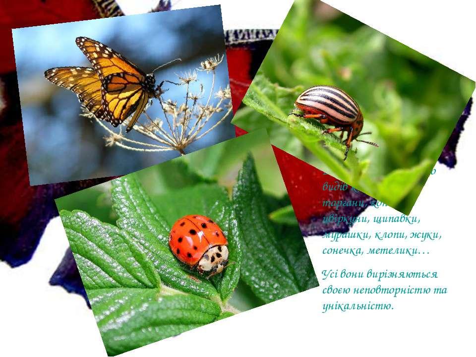 В Україні існує багато видів комах: бабки, таргани, коники, цвіркуни, щипавки...