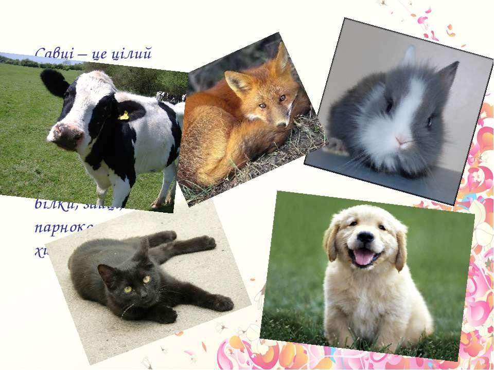 Савці – це цілий світ різноманітних тварин. Серед яких є: гризуни, бобри, біл...