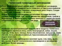 Полесский природный заповедник Поле сский приро дный запове дник — природный ...