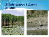 Бідніє флора і фауна Дніпра.