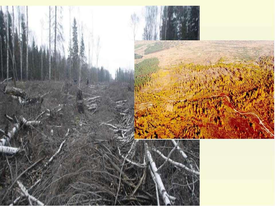 """Після аварії на Чорнобильській АЕС повністю загинули насадження (""""рудий ліс"""")..."""