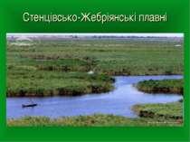 Стенцівсько-Жебріянські плавні