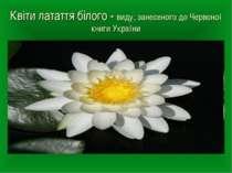 Квіти латаття білого - виду, занесеного до Червоної книги України