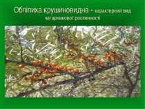 Обліпиха крушиновидна - характерний вид чагарникової рослинності