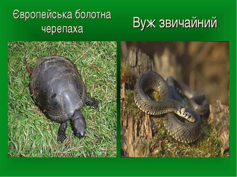 Європейська болотна черепаха Вуж звичайний