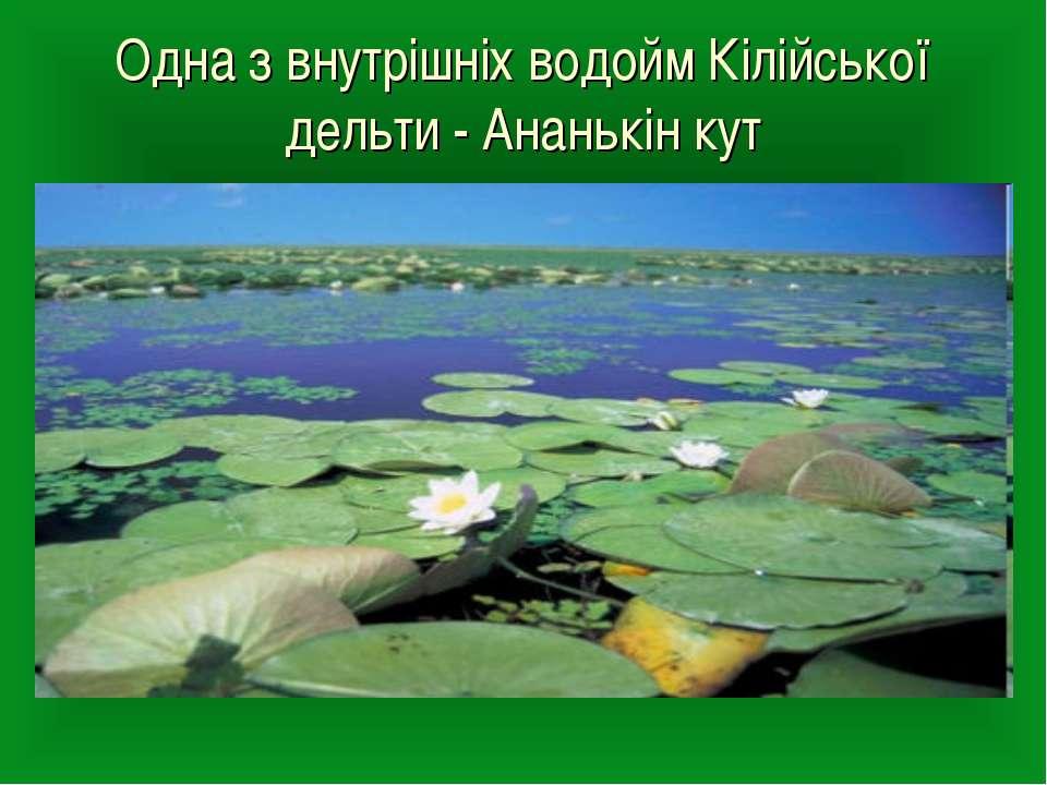 Одна з внутрішніх водойм Кілійської дельти - Ананькін кут