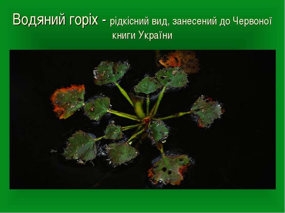 Водяний горіх - рідкісний вид, занесений до Червоної книги України