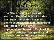 New Forest The New Forest is an area of southern England which includes the l...