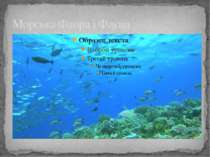 Морська Флора і Фауна