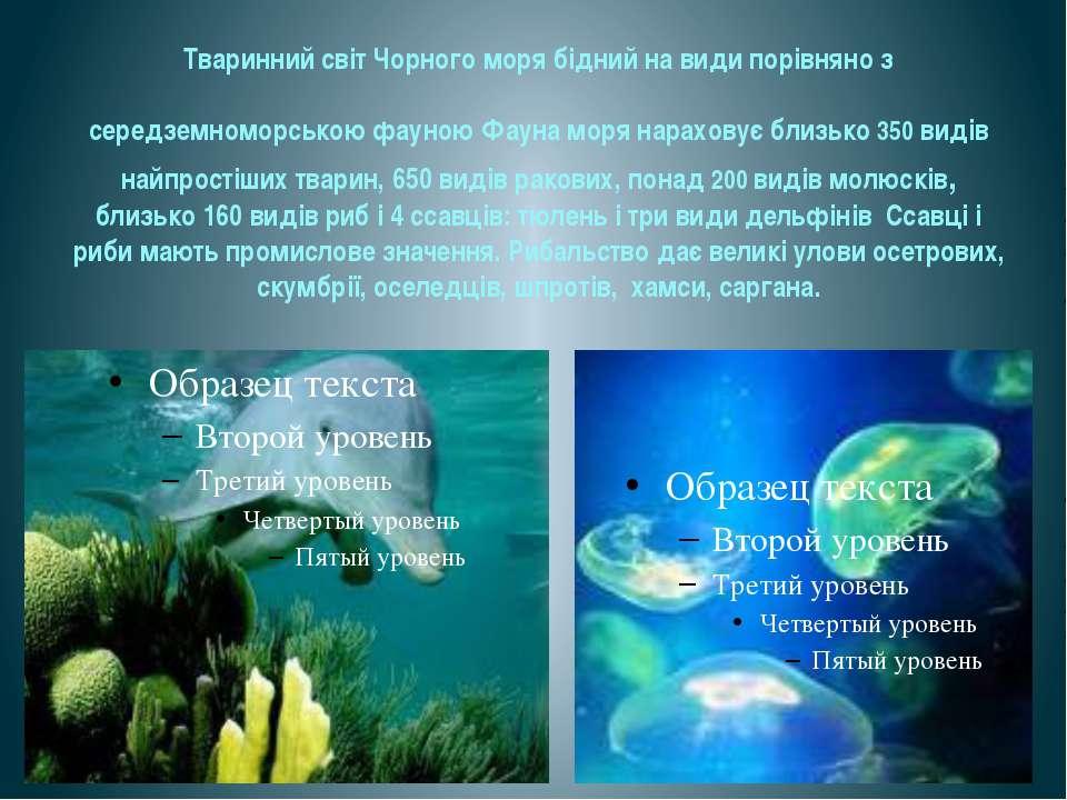 Тваринний світ Чорного моря бідний на види порівняно з середземноморською фау...