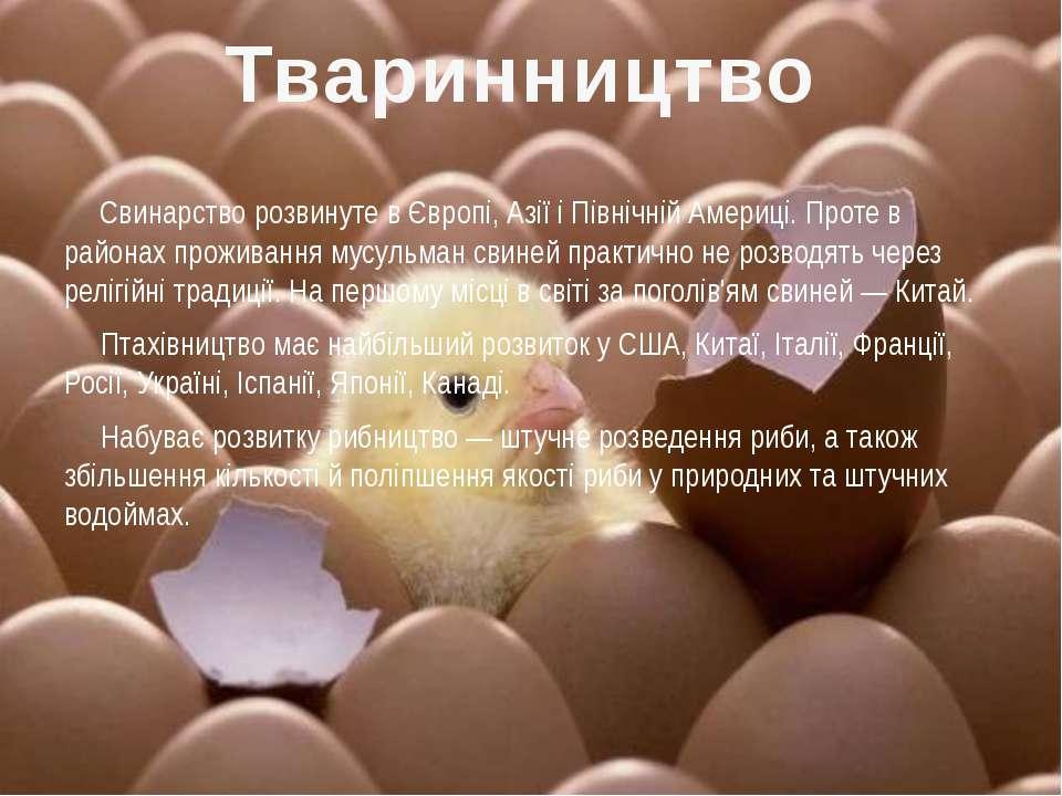 Свинарство розвинуте в Європі, Азії і Північній Америці. Проте в районах прож...