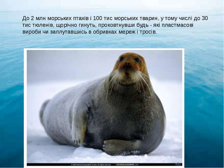 До 2 млн морських птахів і 100 тис морських тварин, у тому числі до 30 тис тю...