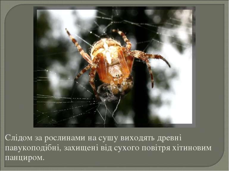 Слідом за рослинами на сушу виходять древні павукоподібні, захищені від сухог...