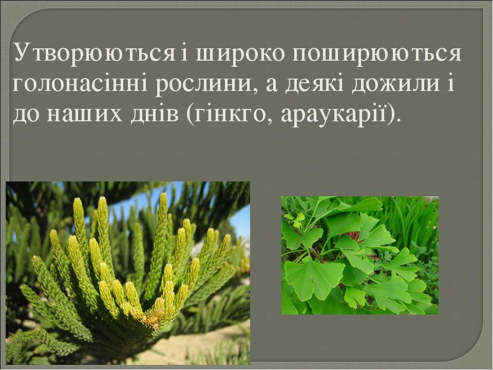 Утворюються і широко поширюються голонасінні рослини, а деякі дожили і до наш...