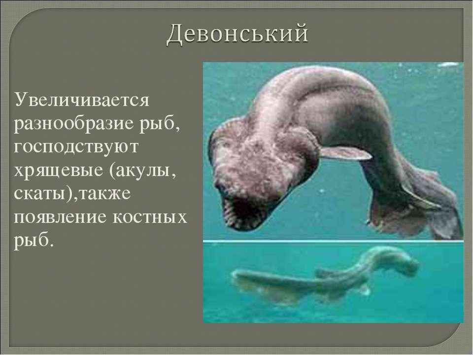 Увеличивается разнообразие рыб, господствуют хрящевые (акулы, скаты),также по...